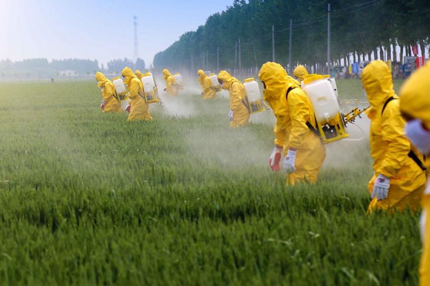 Πρέπει να ανησυχούμε για τα φυτοφάρμακα στα τρόφιμα;